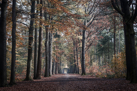 Photo of Autumn leaves in Bouvignedreef road, Mastbos forest, Breda, the Netherlands.