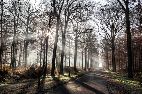 Photo of Autumn morning sunshine, Liesbos, Breda, the Netherlands.