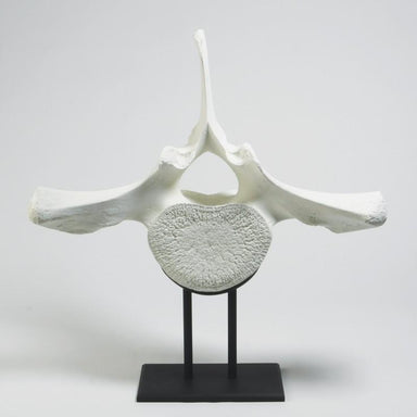 Global Views Home Studio-A by Whale Vertebra On Iron Stand