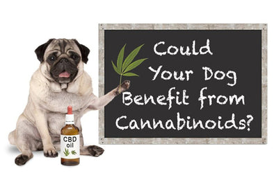 Can i give my dog cbd for anxiety and joint pain? Complete guide