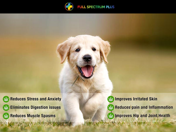 Health benefit of CBD in pets, dogs, cats image