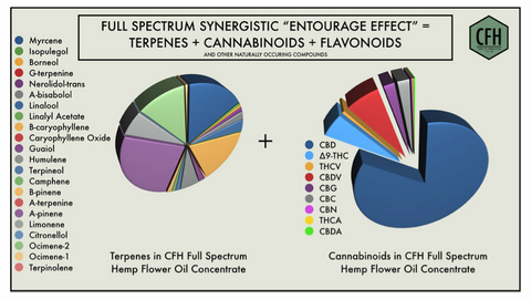 Full spectrum cbd oil terpenes cannabinoids vs cbd isolate