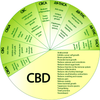 What different CBD Cannabidiols do