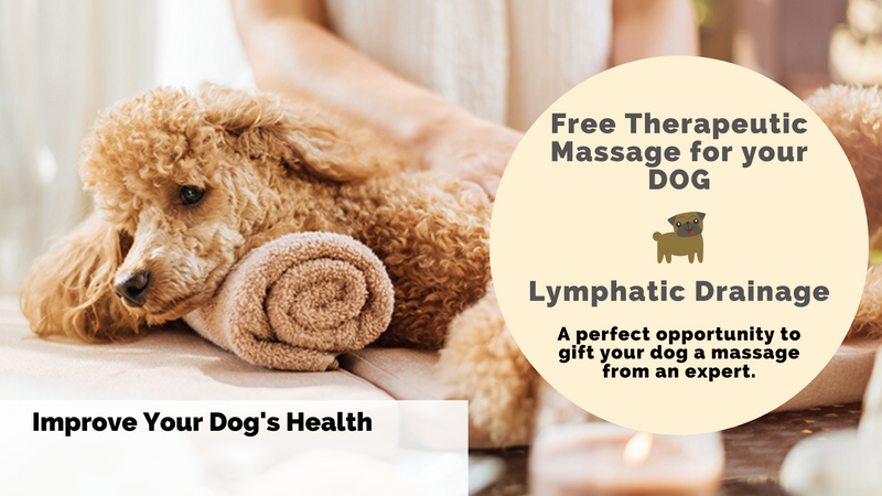 Free Therapeutic Massage for Your DOG