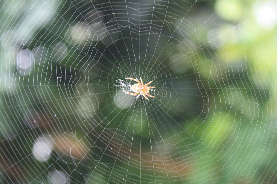 Spider Web Silk for Robotics and Aviation.