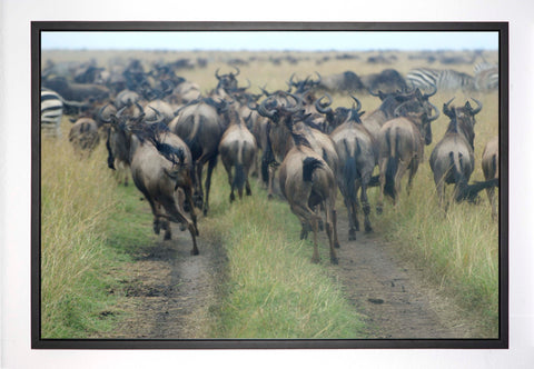 Wildebeest Run