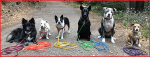Palomine Lines: Welcome to Palomine Lines | custom dog training leads, high quality dog leashes, strong lightweight dog training lines