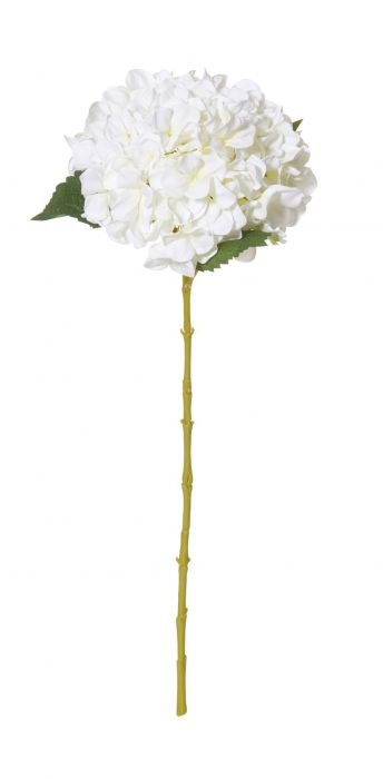 Hydrangea long stem in white