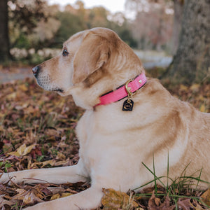 Genuine Leather Dog Collar: The Mayfair Collar