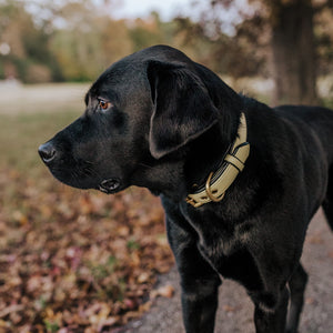 Genuine Leather Dog Collar: The Dover Collar
