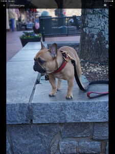 The Athens Grip For Dog Leads