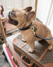 Load image into Gallery viewer, Genuine Leather Dog Collar - The Ascot Collar