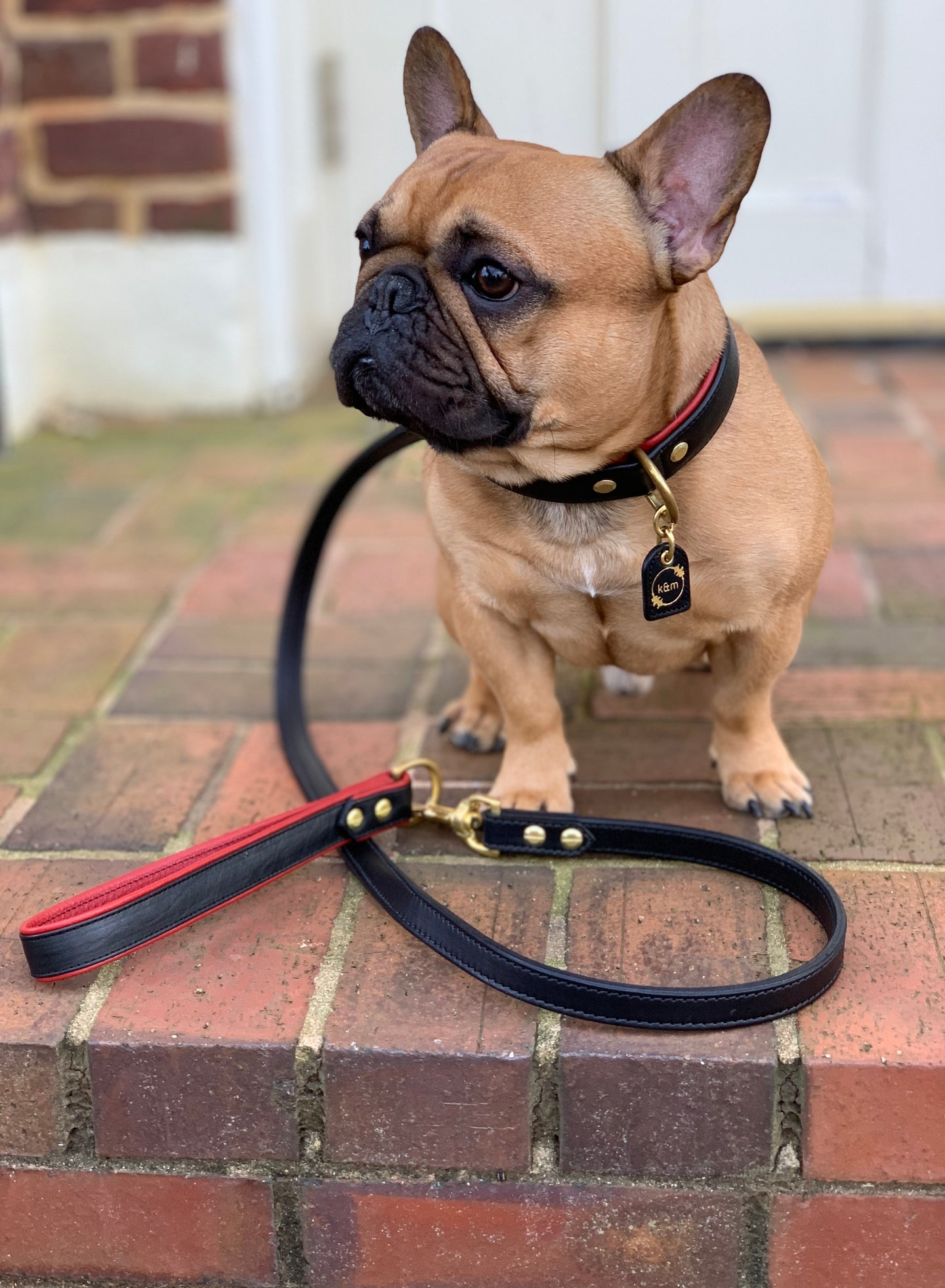 The Dooley Grip For Dog Leads