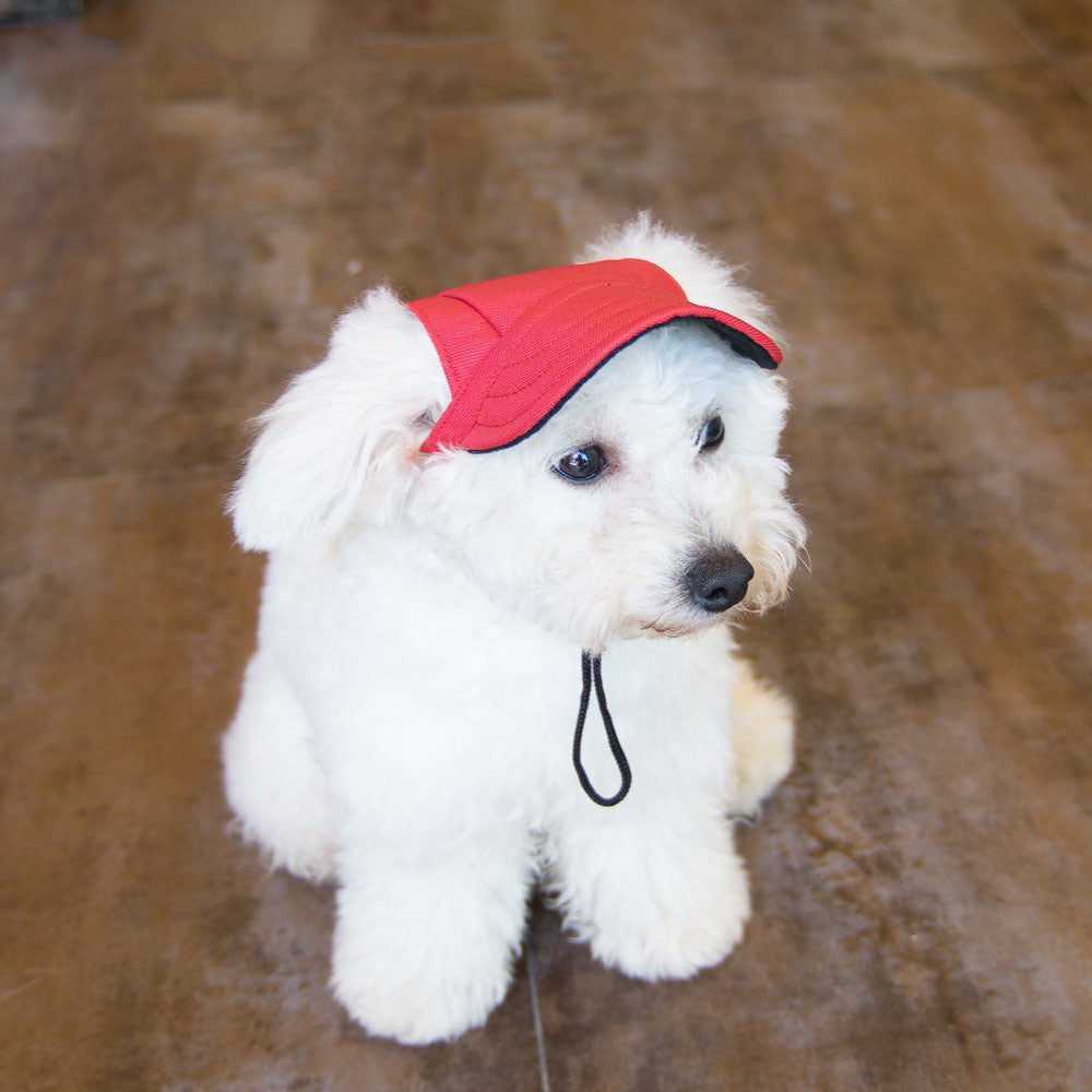 Baseball Cap with Ear Holes for Small Dogs