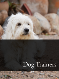 Dog Trainers Optimized Hashtag Report