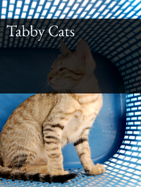 Tabby Cats Optimized Hashtag Report