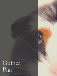 Guinea Pigs Optimized Hashtag Report