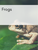 Frogs Optimized Hashtag Report