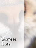 Siamese Cats Optimized Hashtag Report