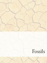 Fossils Optimized Hashtag Report