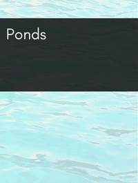 Ponds Optimized Hashtag Report