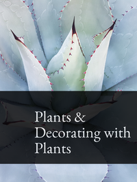 Plants & Decorating with Plants Optimized Hashtag Report