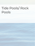 Tide Pools/Rock Pools Optimized Hashtag Report