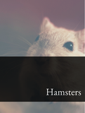 Hamsters Optimized Hashtag Report