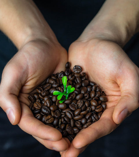 Thoughts on Fairtrade and Organic Coffee