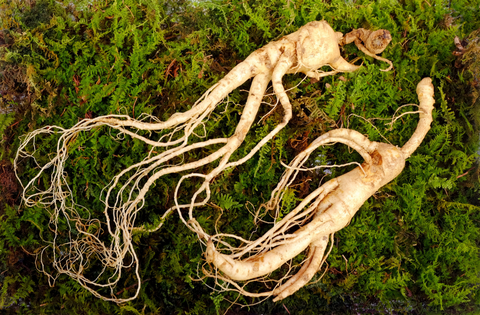 Ginseng-to-boost-energy-levels-and-vitality-naturally-natureal