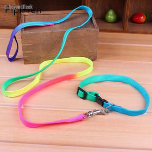 Candy Collar Pets Leash