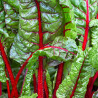 Swiss Chard (Red) Organic Seeds