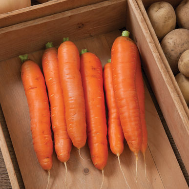 Balero Winter Carrots 2lb
