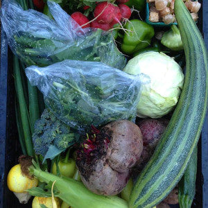 Farmship's CSA Box