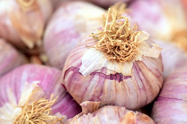 Persian Star Garlic 1/2lb