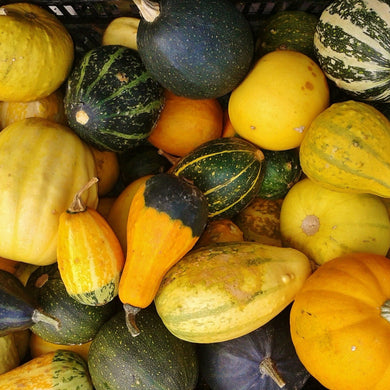 Mixed Frozen Squash