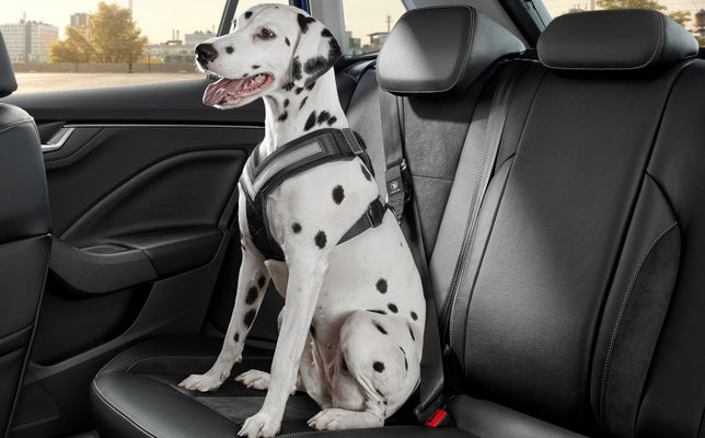 "Dog safety belt - ""L"""
