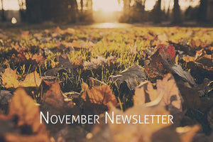 OWLS November Newsletter - OWLS CONSULTING MODEL GAINS TRACTION WITH CLIENTS