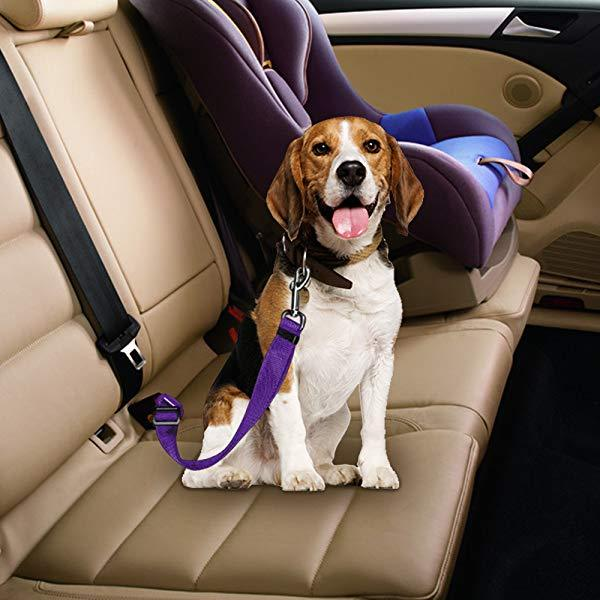 Dog Safe Seat Belt
