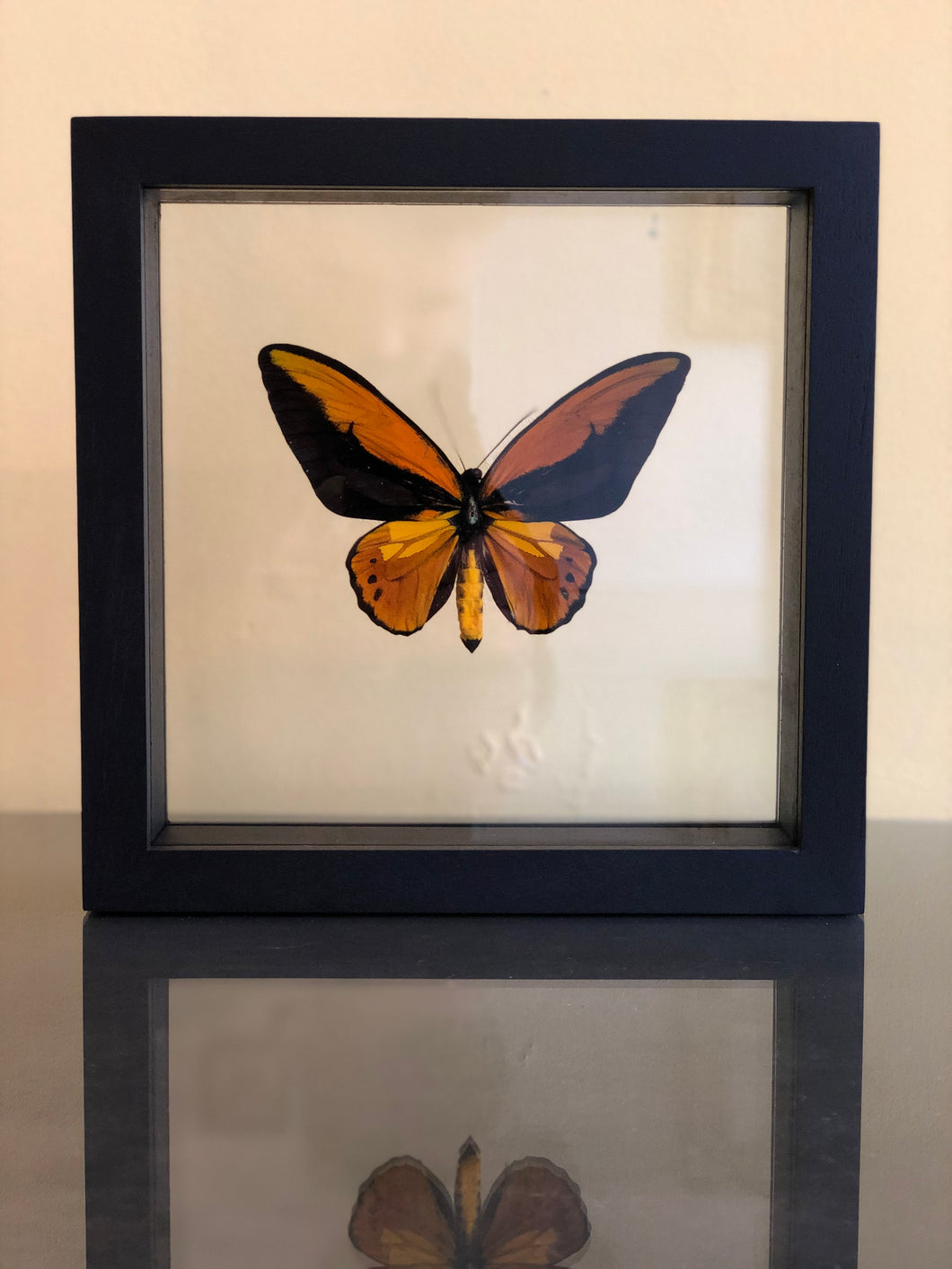 Ornithoptera Croesus in lijst