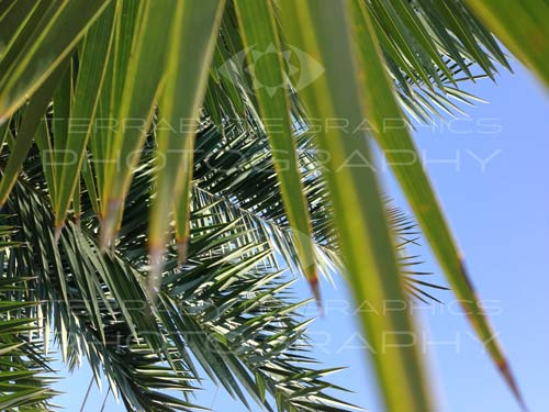 Photo of Palm: #2