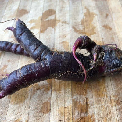 Himalayan Black Carrot