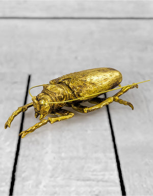 Large Gold Wall Hanging Beetle