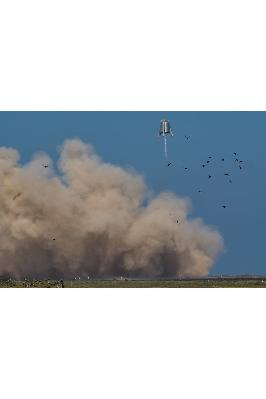 Starhopper and some birds