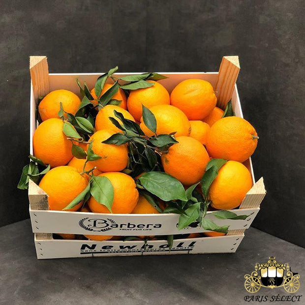 Orange Feuille Washington Navel cal.2/3, Barberra, Italie, 40x30x10KG, Prix / KG