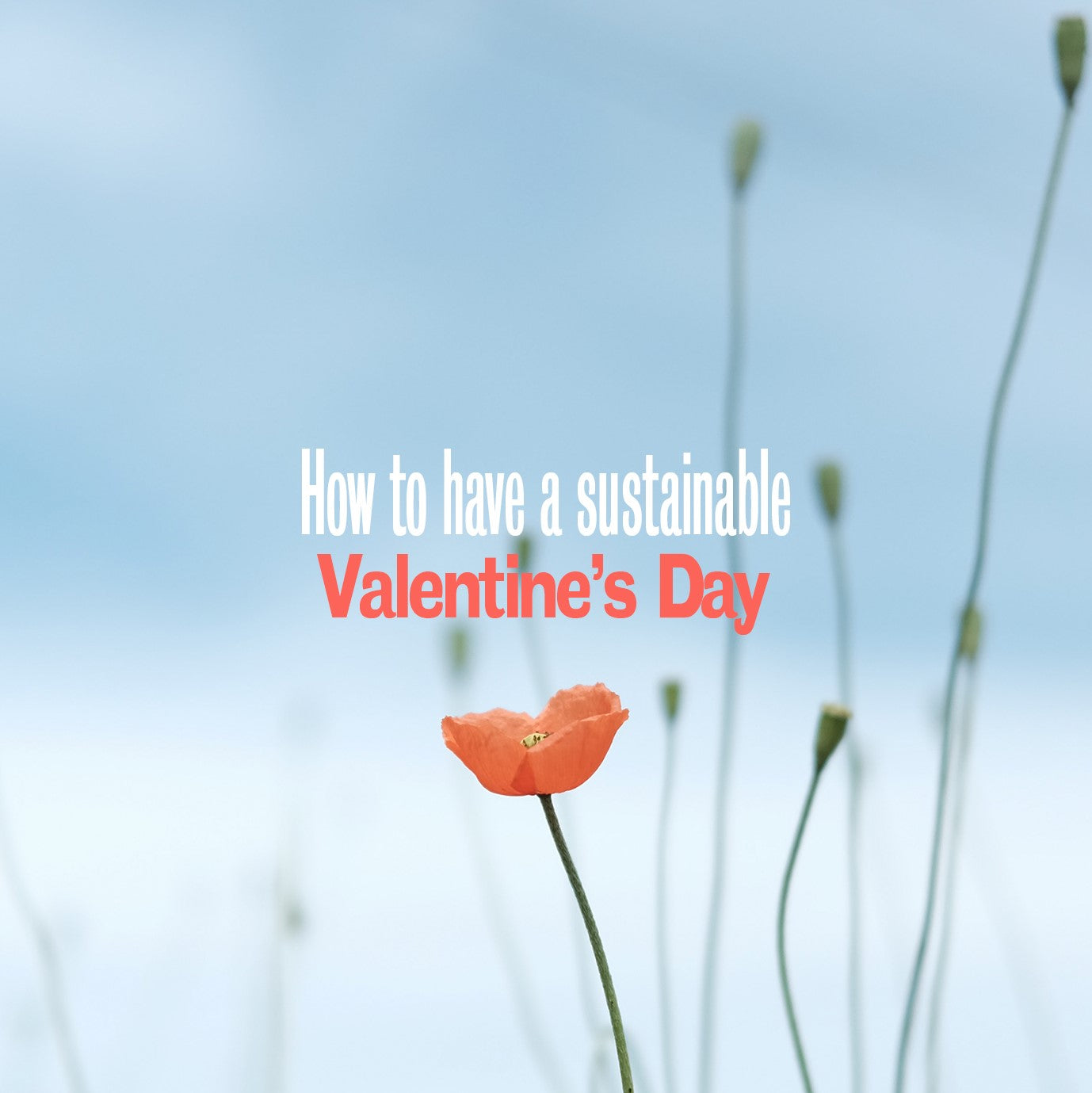 How to have a sustainable Valentine's Day