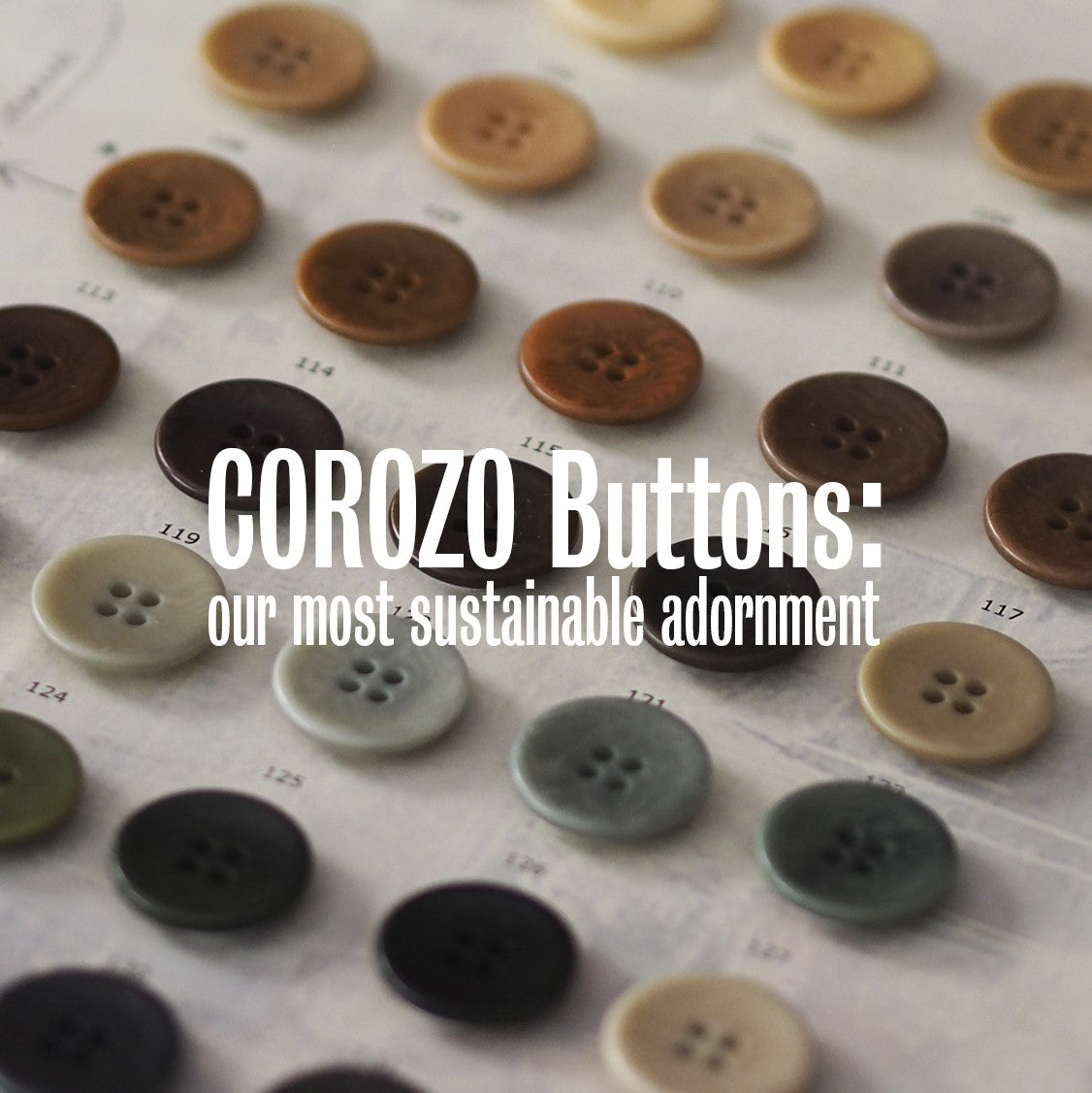 Corozo buttons: our most sustainable adornment