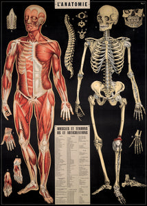 SKELETON - ANATOMY Poster / Wrap