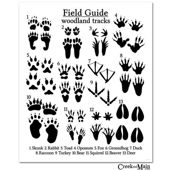 animal tracks, woodland animal poster, creekandmain.com