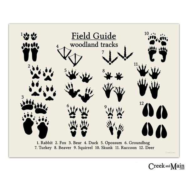 animal tracks, woodland art print